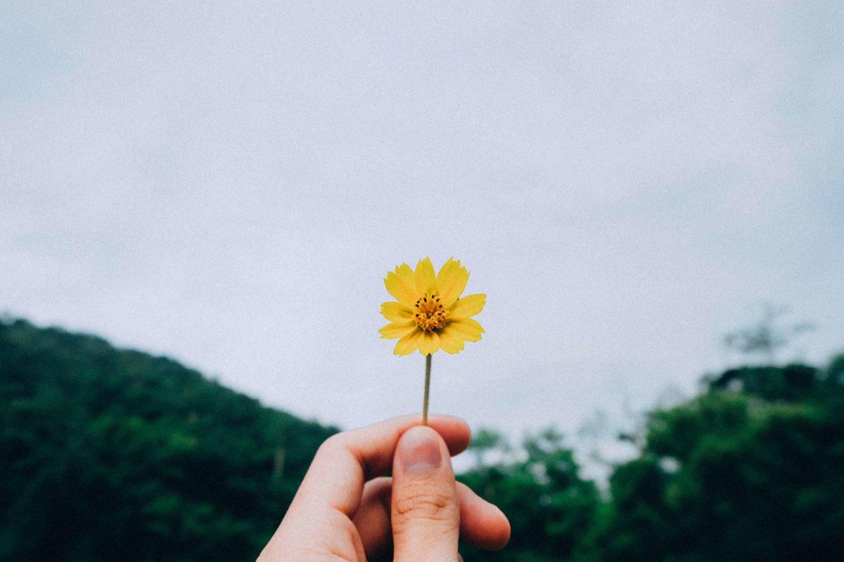 Dankbarkeit im Alltag leben [mit Vorlage für dein Dankbarkeits-Tagebuch]